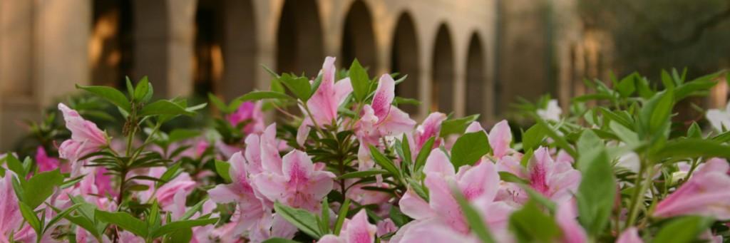LSU Quad azaleas cropped